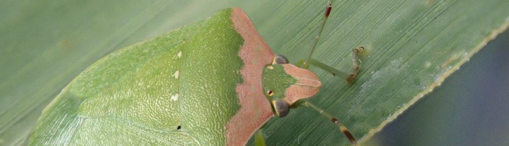 農林害虫防除研究会
